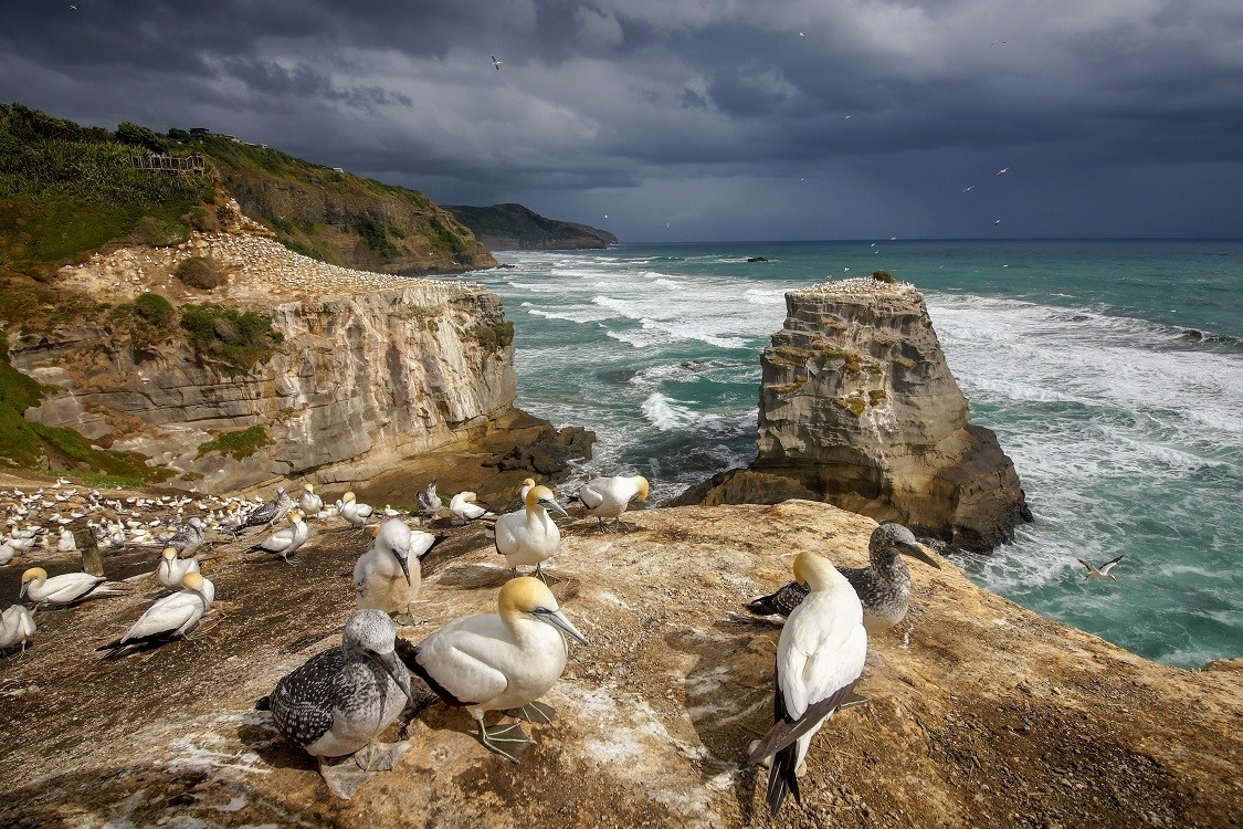 Muriwai Cliffs