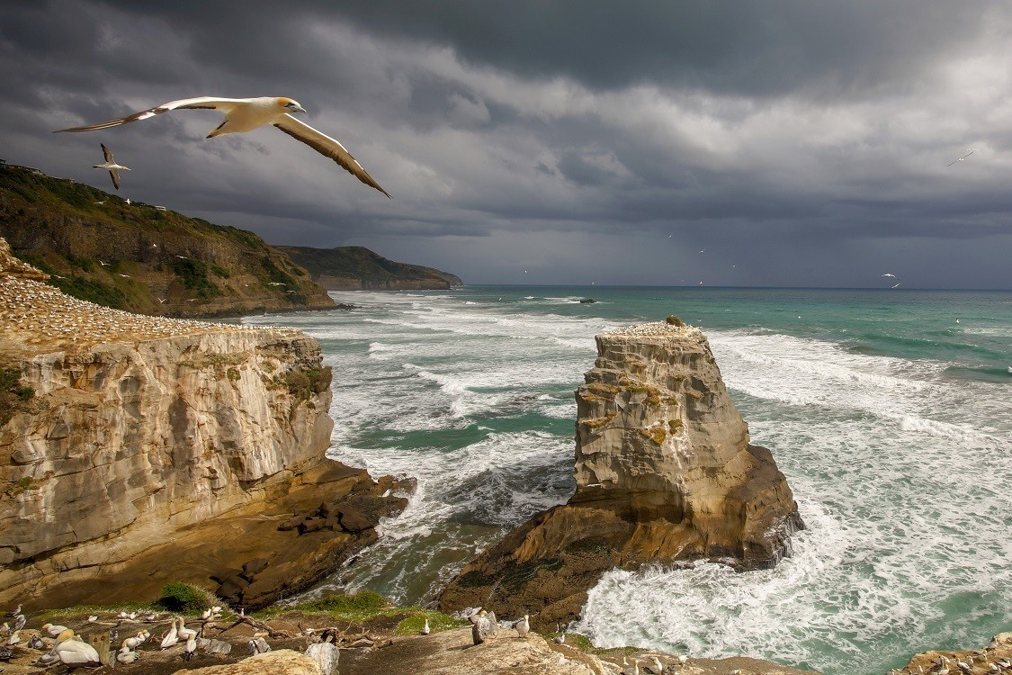 Muriwai Cliffs