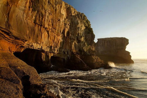 dragannz Muriwai Cliffs