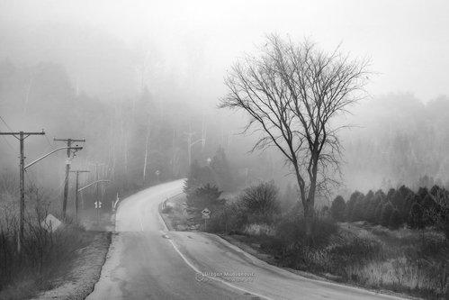 dramil Put koji ne vodi nigdje...