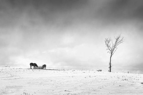 dramil Zimska priča