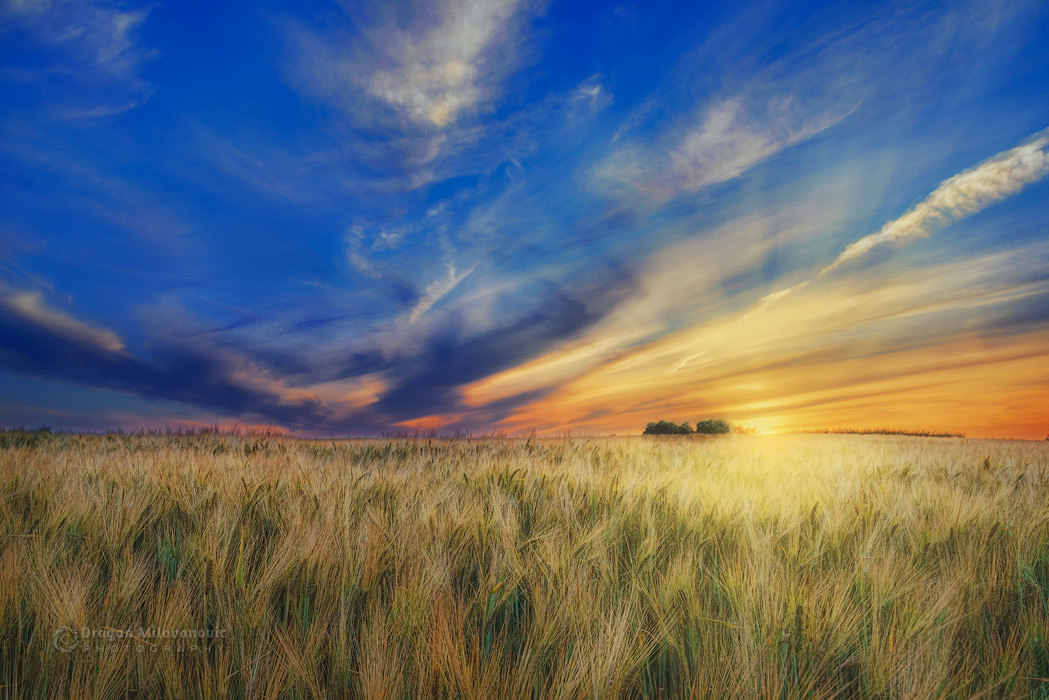 Sunset over wheat field II