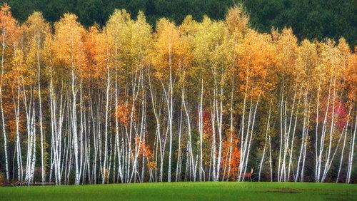 dramil L'automne est arrivé