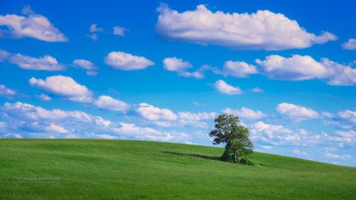 dramil Prica o drvetu...