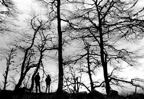 drris66 Čudna šuma