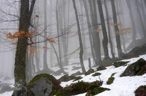 drris66 Misty forest