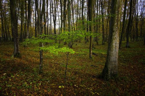 dumicsilvio Drvo