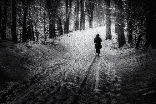 dusvuk Na snijegu