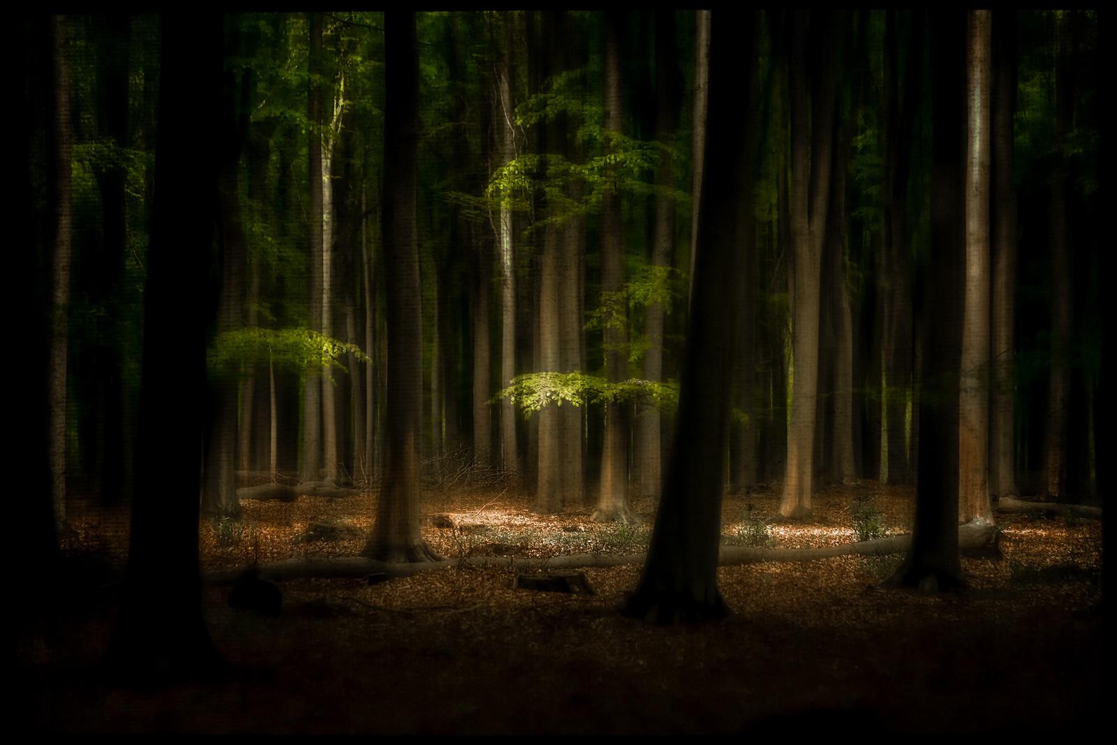 Svjetlosna oaza u šumi