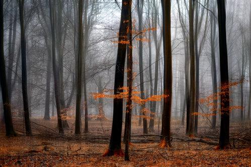 dusvuk Pretežno narandžasto
