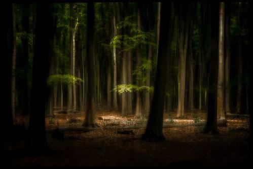 dusvuk Svjetlosna oaza u šumi