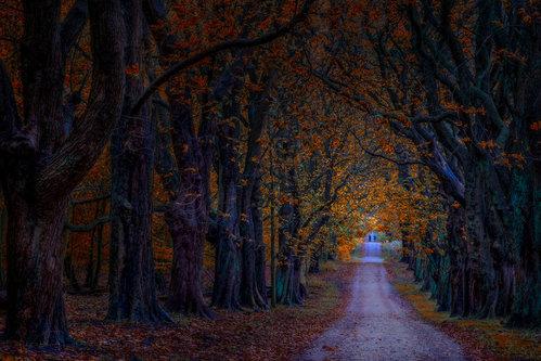 dusvuk Prva, jesenja...