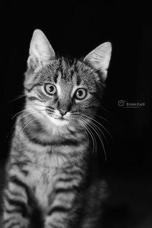 ermin1988 Katze
