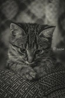 ermin1988 Maca