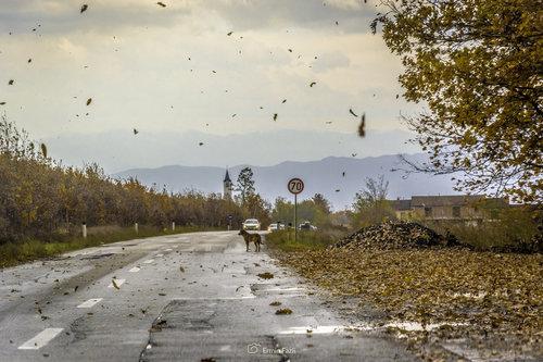 ermin1988 Usamljeni pas i jesen