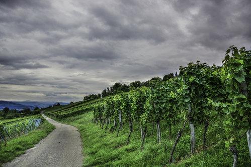 ermin1988 Vinograd