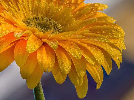 esekerri yellow