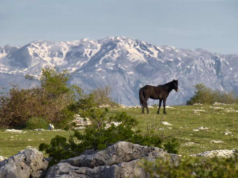 Mountain Black