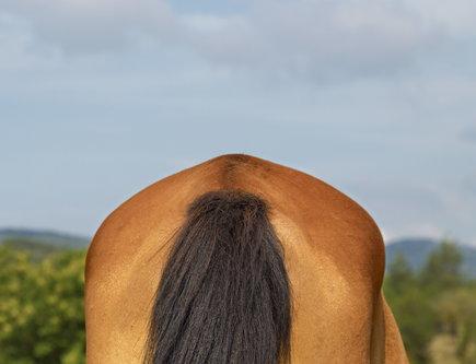 felixthecat6 Horses Ars