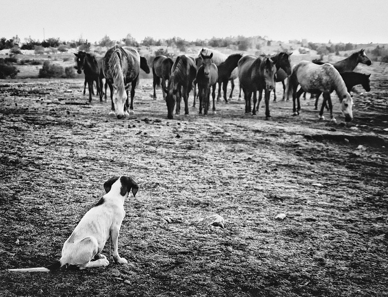 Doggy and Horses