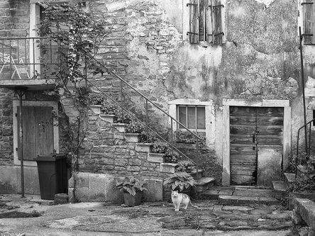 felixthecat6 Courtyard Cat