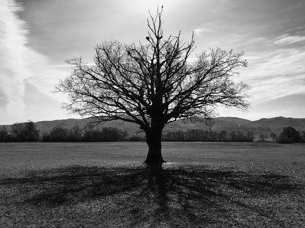 felixthecat6 Shadow of an old Tree