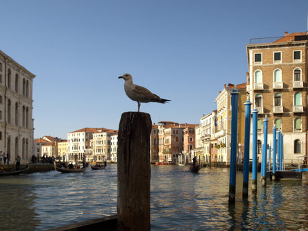 felixthecat6 the Gull of Venice