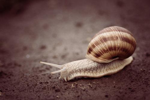 freetimephoto Snail