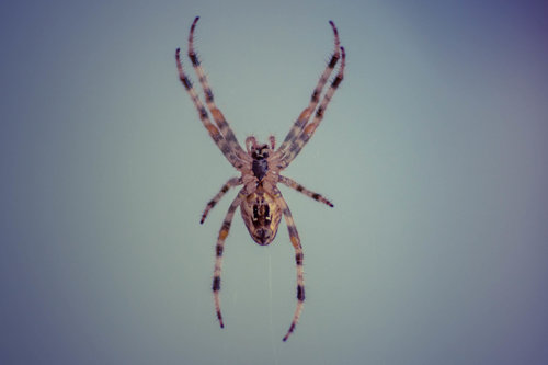 freetimephoto Spider