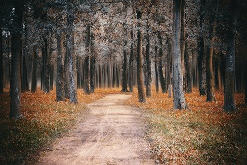 gagarose Šuma
