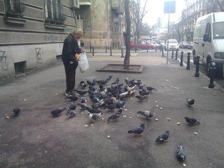 gagistudio Pigeons!