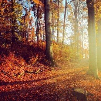 halex Ujutro u šumi