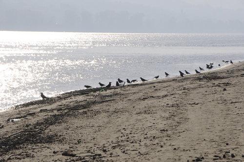 ivanF Čuvari plaze