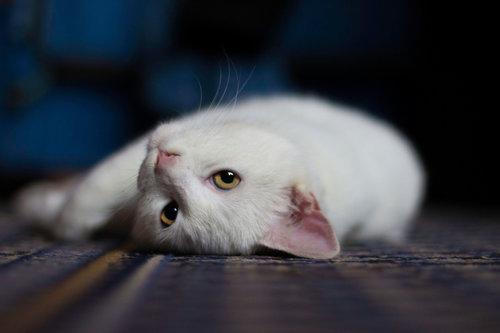 ivana_mi Meow