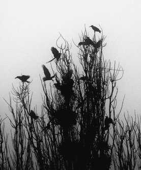kodzo Mystical Morning
