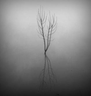 kodzo u magli
