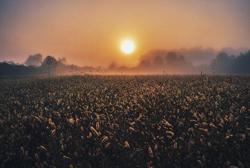 kodzo Jesenje svitanje
