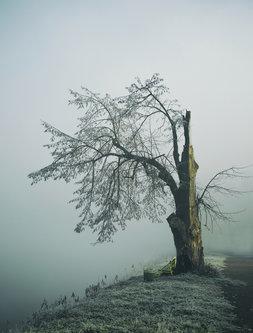 kodzo Ranjeno drvo