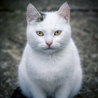 kontrash Mačak
