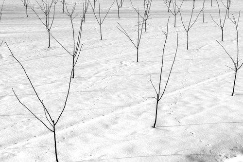 kontrash Šuma