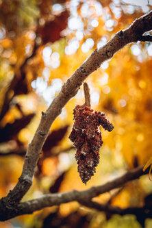 kontrash Jesen 2