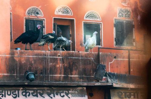 kosic Jaipur.