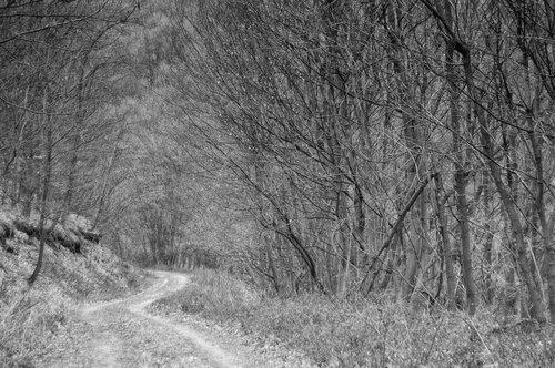 ladyjane ulaz u šumu
