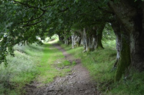 ladyjane zeleni tunel