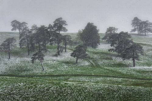 lapce Aprilski sneg