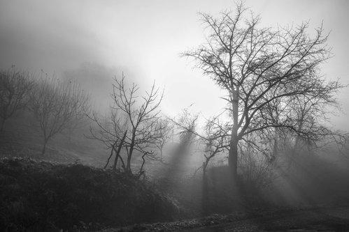 macvanin sunce i magla