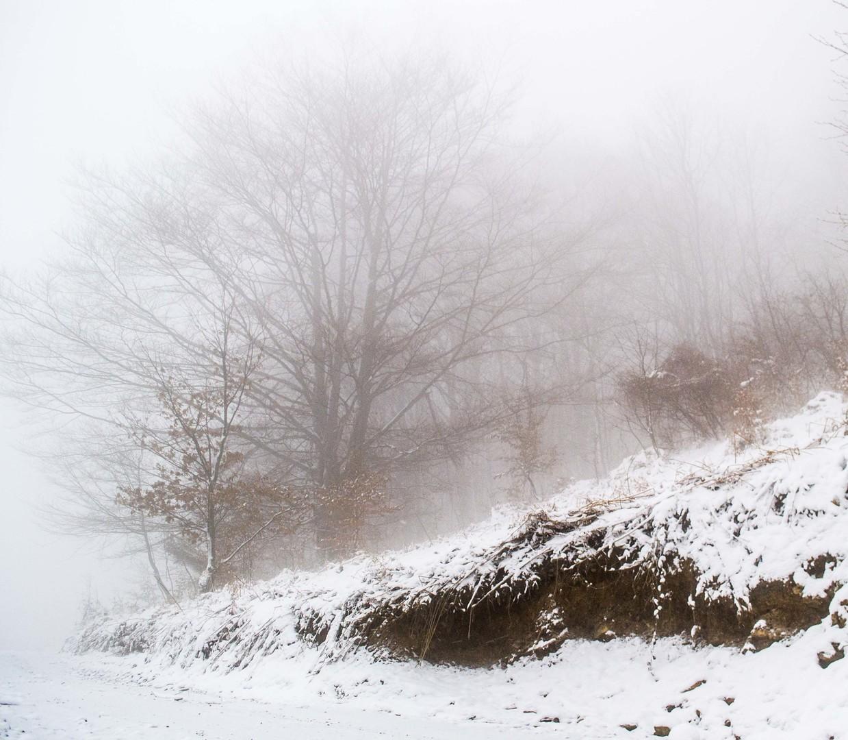 Obala puta pod snegom