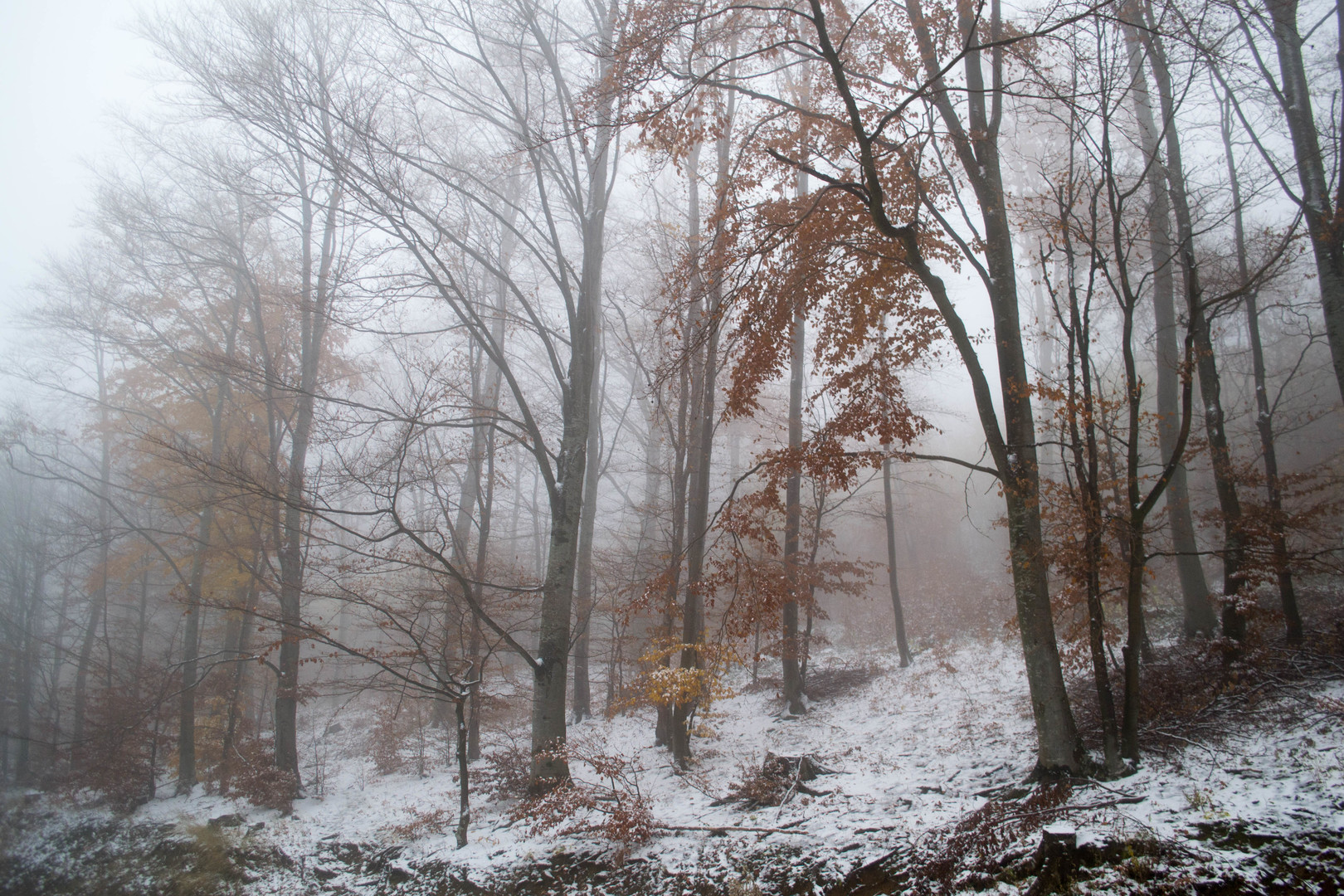 Zimski pejzaž 2, prvi sneg