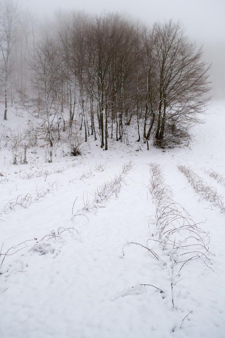 drvo i zasad, zimi