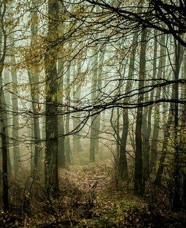 macvanin Šumska dvorana